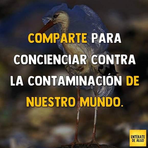 contaminacion6